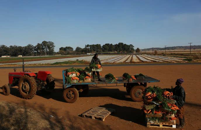 Sur une exploitation agricole d'Eikenhof, près de Johannesburg, en Afrique du Sud, en juin 2018.