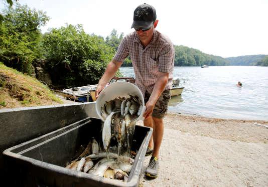 Une tonne de poissons morts a été extraite du Rhin dans le nord de la Suisse, près de la ville de Schaffhouse.