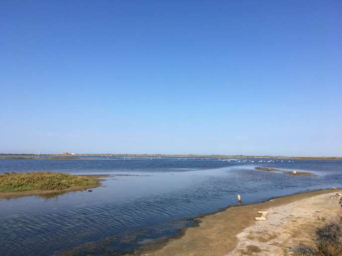La plage de Beauduc, près d'Arles.