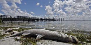Sur la plage de Bradenton, sur la côte intérieure de Floride, le 6août.