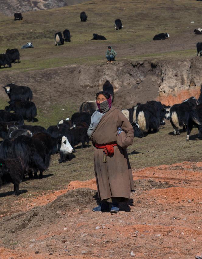 Un éleveur tibétain de yaks dans la province du Qinghai, dans l'ouest de la Chine, en octobre 2017.