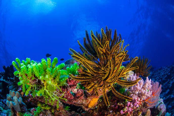 Récifs coralliens d'Entrecasteaux, en Nouvelle-Calédonie.