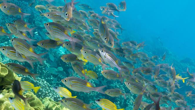Le site des récifs et atolls d'Entrecasteaux, inscrit au patrimoine mondial de l'Unesco, abrite une biodiversité rare.