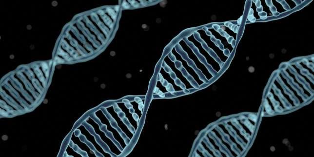 Des molécules d'ADN.