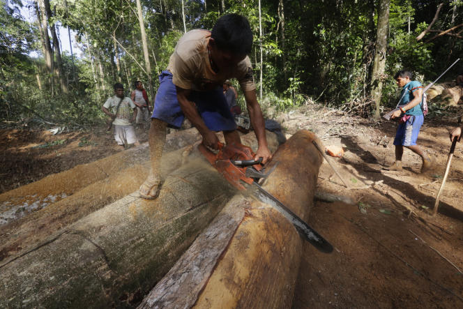 Un Indien Kaapor détruit des grumes au cours d'une expédition contre un camp de bûcheronnage, dans l'Etat du Maranhao, au Brésil, en août 2014.