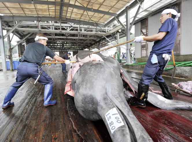 Des pêcheurs japonais dépècent une baleine à bec de retour au Japon, en 2008.