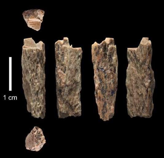 Cet os trouvé en 2012 dans la grotte de Denisova (Altaï) par des archéologues russes appartenait à une adolescente (Denisova 11) dont la mère était néandertalienne, et le père dénisovien.
