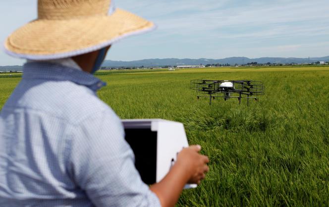 Un drone à l'œuvre au-dessus d'une rizière à Tome, dans la province de Miyagi, le 20 août 2018.