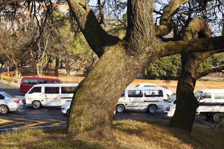 Les habitants sont invités à signaler les arbres malades au département des parcs et forêts. Impossible néanmoins de savoir combien d'arbres sont concernés.