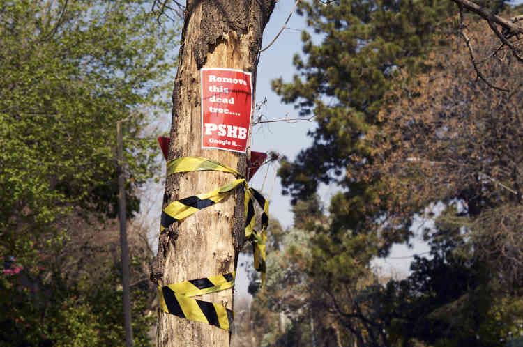 Un riverain a accroché aux arbres infestés des panneaux indiquant« retirez cet arbre mort, et cherchez sur Google PSHB», l'acronyme anglais du scolyte.