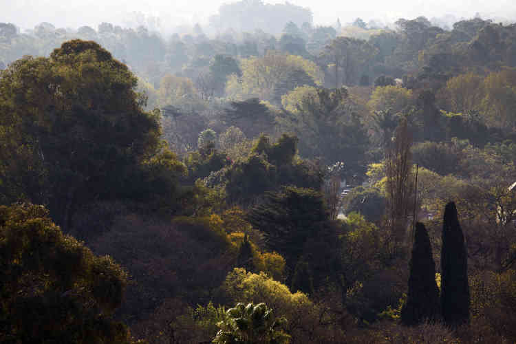 Johannesburg dispose d'une forêt urbaine de 6 à 10 millions d'arbres.