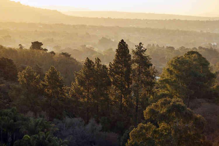 La solution adoptée par la Californie et Israël, où le scolyte polyphage a déjà sévi, a été d'abattre tous les arbres infectés, et en priorité les espèces où l'insecte se reproduit.