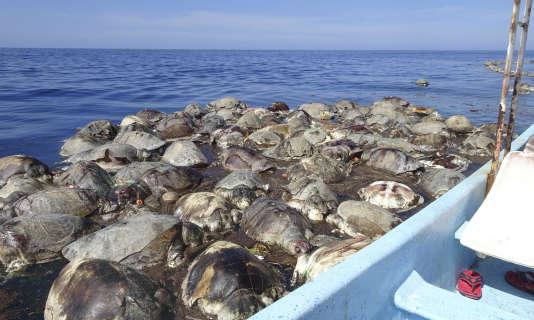 """Résultat de recherche d'images pour """"tortues au mexique mort"""""""
