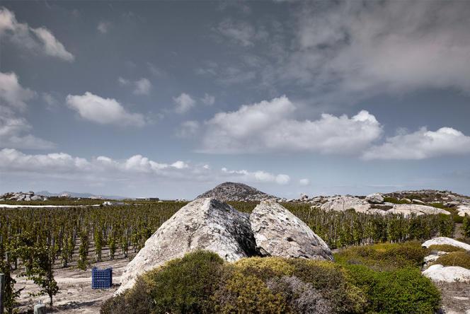 Les vignes du domaine T-Oinos sur l'île de Tinos