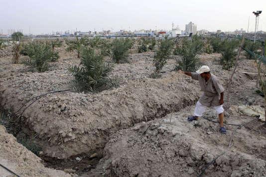 Qassim Sabaan Ali montre sa ferme, qui manque cruellement d'eau, à Siba, dans une région historiquement appelée « le pays entre les deux rivières » : la Mésopotamie.