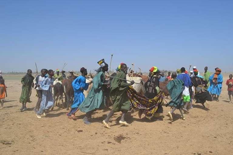 Au Mali, danse d'éleveurs avec des bœufs.
