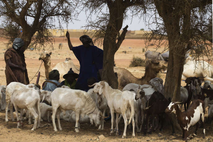 Des bergers près de Mopti, dans le centre du Mali, en mars 2013.
