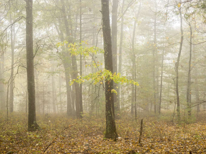 Dans une forêt américaine. Image extraite de la série « Fog ».