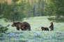 Au coeur du Grand Teton National Park.