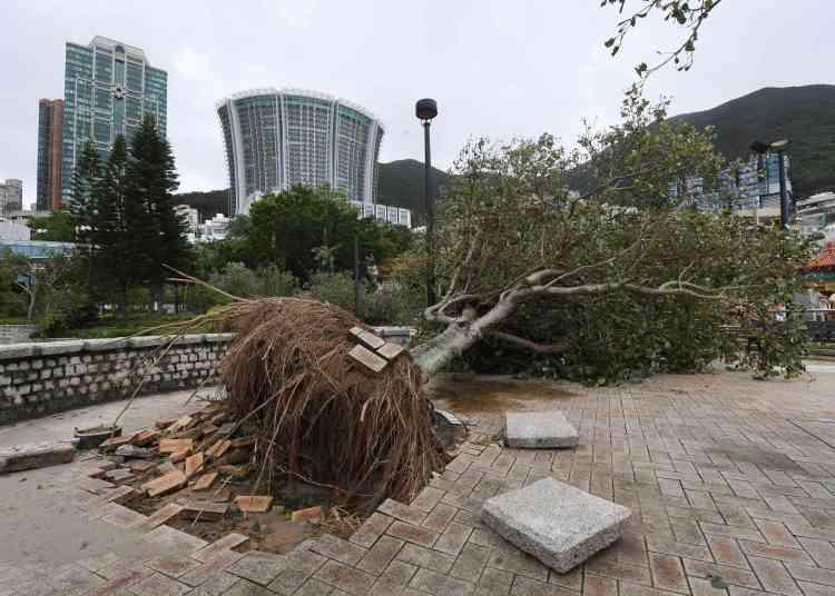 Sur la plage de Repulse Bay à Hongkong, le 17 septembre. Partout dans l'ex-colonie britannique retentissait le bruit des tronçonneuses coupant les arbres.