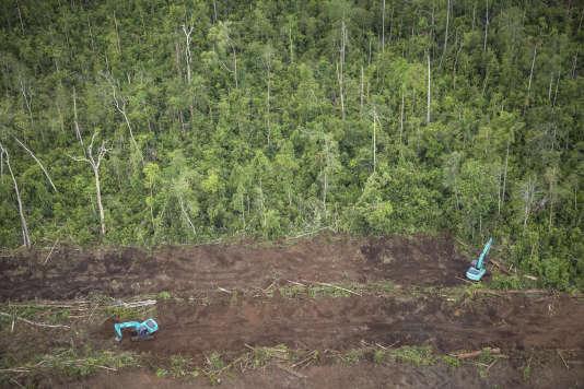 Déboisement pour préparer la plantation de palmiers à huile dans le village de Selauw (Papouasie-Nouvelle-Guinée), en décembre 2017.