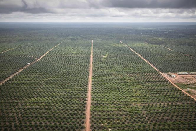 Plantation de palmiers à huile dans la région de Merauke au sud de la Papouasie-Nouvelle-Guinée en décembre 2017.