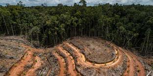 Déboisement pour la plantation de palmiers à huile dans la concession PTMegakaryaJaya Raya, enPapouasie, le 1er avril.