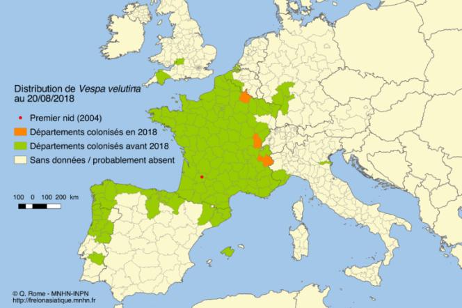Le frelon asiatique occupe désormais quasi tout le territoire français.