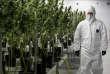 Une production de cannabis médicinal chez Tweed Inc à Smiths Falls, en Ontario (Canada), le 5 décembre 2016.
