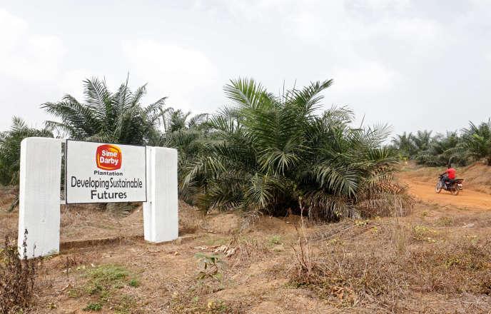 Une plantation du groupe Sime Darby dans le nord-ouest du Liberia, en décembre 2017.