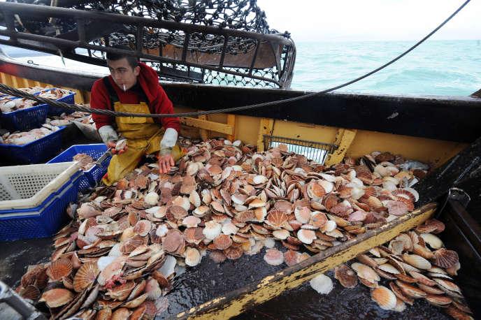 Un pêcheur de coquilles Saint-Jacques dans la baie de Saint-Brieuc.