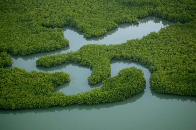 Dans la mangrove de l'archipel des Bijagos (Guinée-Bissau).