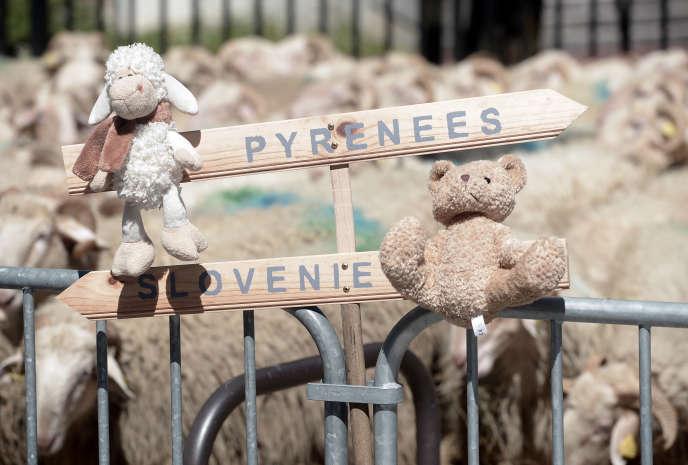 Lors d'un rassemblement d'éleveurs dans les Pyrénées, le 30 avril 2018.
