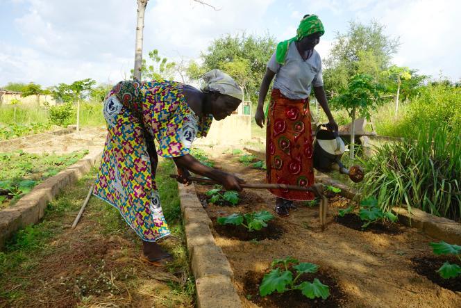 A la ferme écologique de Blandine Sankara, àYelemani, à Loumbila, près de Ouagadougou, au Burkina Faso, en septembre 2018.