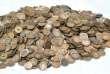 Pièces de monnaie retirées de l'estomac d'un Japonais atteint de pica.