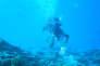 Les plongeurs de la mission dans le lagon de Koumac en Nouvelle-Calédonie, en septembre.