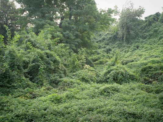 L'objectif de l'artistea su capter toute lapoésie inquiétante qui se dégage de cet incroyable tapis végétal.