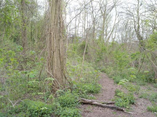 Des lianes au bord d'un chemin emprunté par de rares promeneurs aventureux.