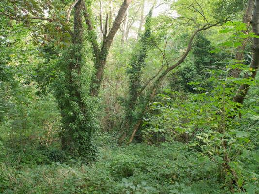 Une forêt aux essences familières, mais pleine de mystère.