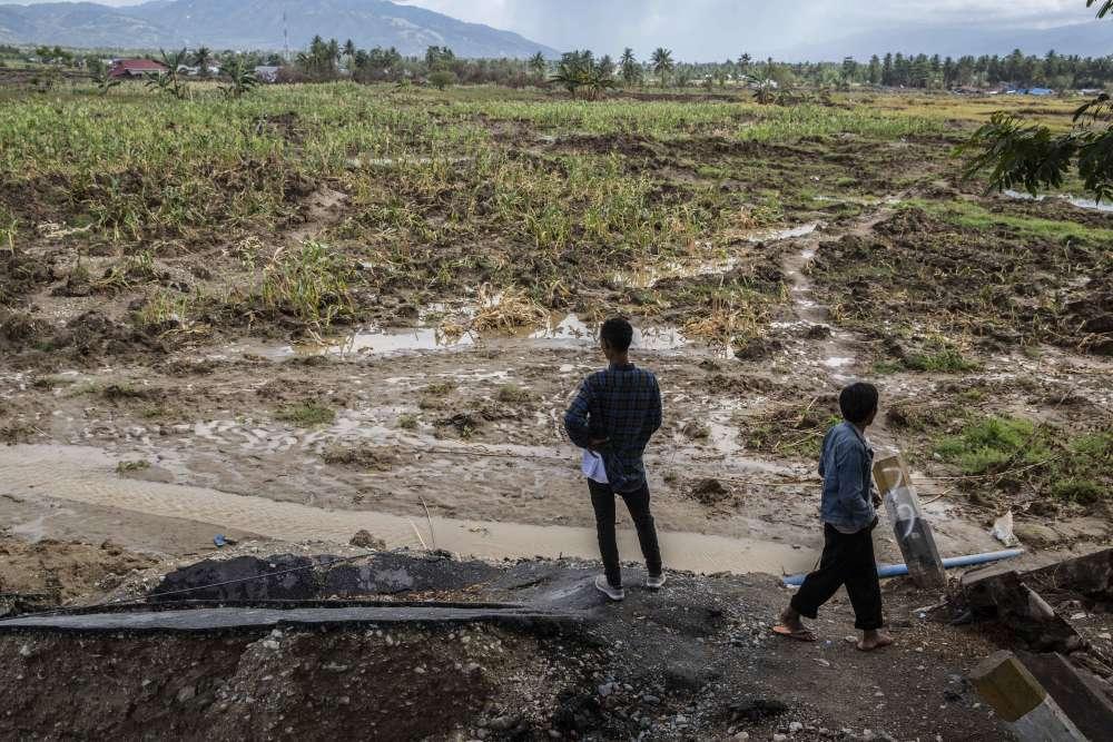Près du village de Jono Oge, ce champ de maïs, déplacé par la force du séisme, était à l'origine une route bordée de maisons.Une église protestante, où des séminaristes étudiaient la Biblea également été transportée trois kilomètres plus loin. Une trentaine deséminaristes sont morts.