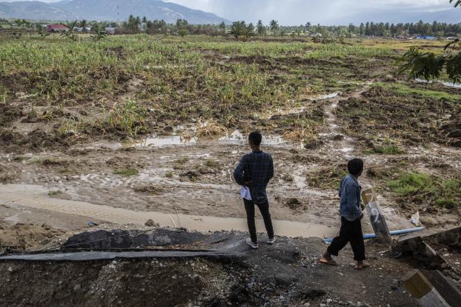 Au village de Jono Oge, deux habitants observent un terrain, qui s'est« liquéfié» au moment du séisme.