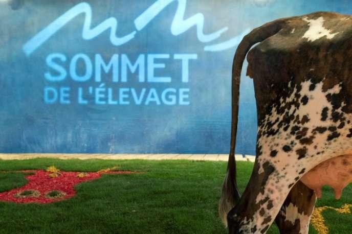 Au Sommet de l'élevage de Cournon (Puy-de-Dôme), le 3 octobre.