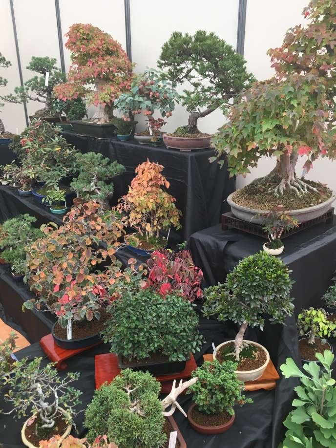 Le stand d'un exposant, lors du Congrès mondial du bonsaï, à Mulhouse.