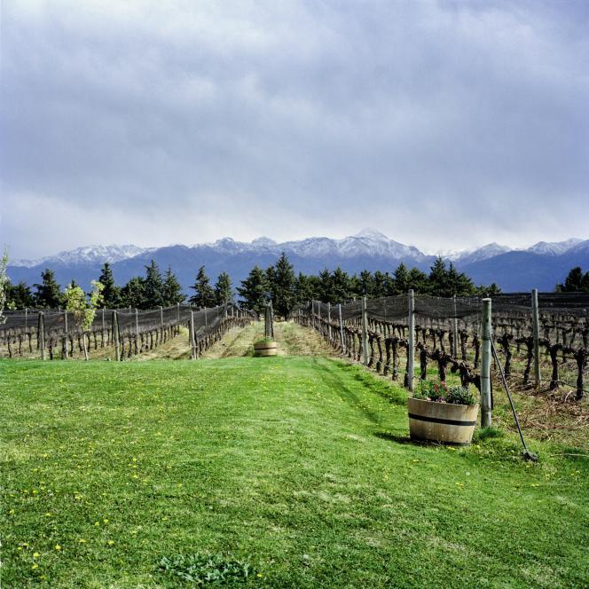 La bodega Atasmique, au pied du Tupungato, s'étend sur 70 hectares de vignes, plantées à 1 300 mètres d'altitude.