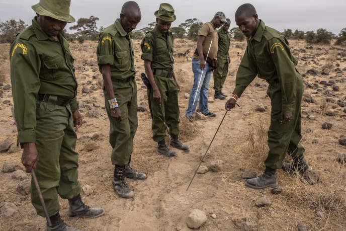 Des agents de protection de la faune sur les traces d'un éléphant, à Kitirua, dans le parc d'Amboseli (Kenya), le 9 octobre.