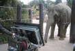 L'éléphante Authai durant l'expérience, à Tokyo.