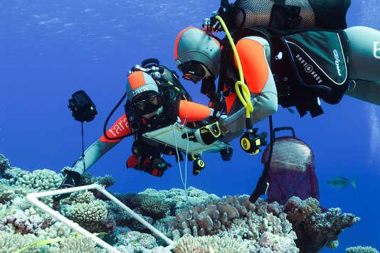 L'expédition a réalisé près de 2 700 plongées, prélevant près de 36000 échantillons, notamment de coraux.