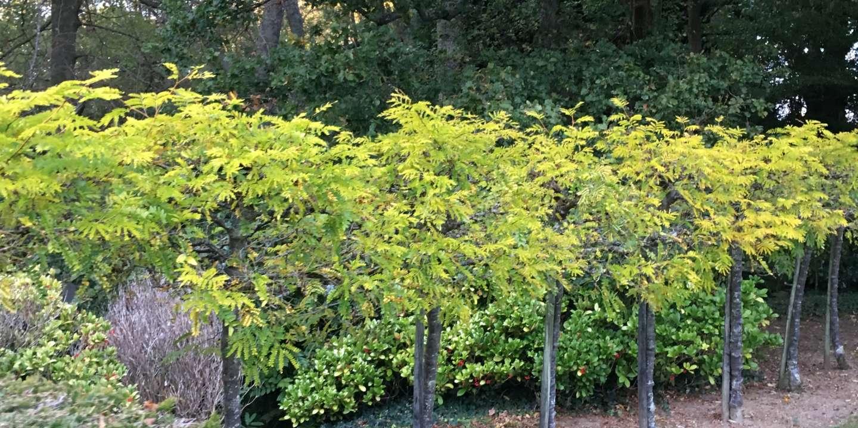 Varengeville Un Eden Pour Les Jardins
