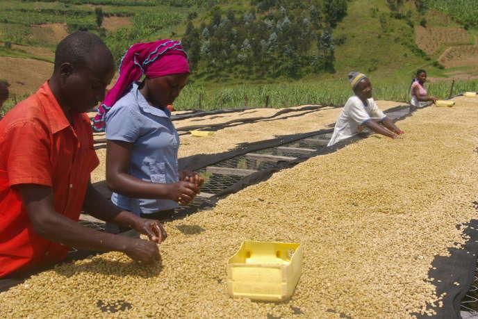 La Coopérative de Kopakama dispose d'une chaîne de transformation complète de transformation du grain.