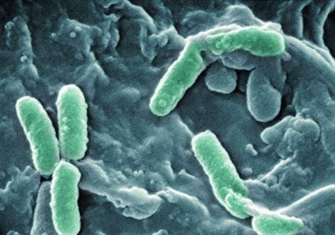 La Pseudonomas aeruginosa est de plus en plus résistante aux antibiotiques disponibles.